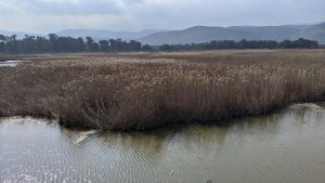 Hula Valley Sanctuary