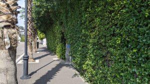 Street vines